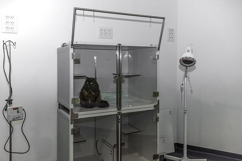 gatos-media-uno.jpg