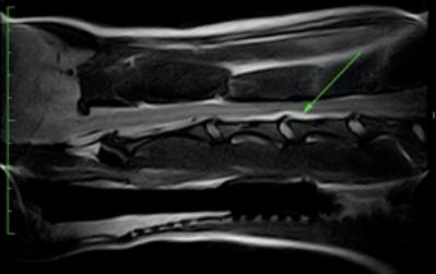 radiografia02.jpg